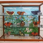 Butterfly Model Display