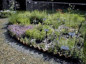 Culinary Bed Herb Garden