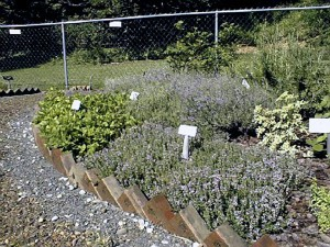Fragrance Bed Herb Garden