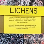 Lichens Display