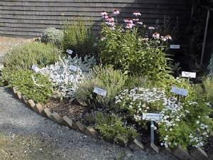 Medical Bed Herb Garden