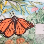 Monarch Butterfly Model