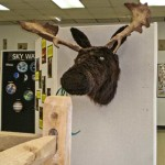 Moose Display