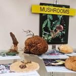 Mushroom Display