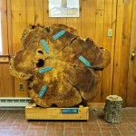White Pine Display