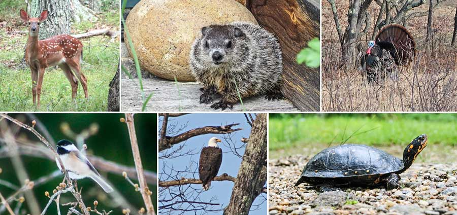 Some of the fauna found at Norcross Wildlife Sanctuary