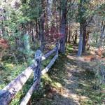 Cedar Swamp Trail