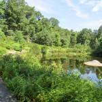 Coastal Kettle Pond Garden