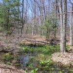 Vernal Pool Trail