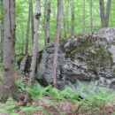 Dog Rock: See the beagle?